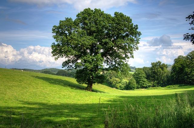Nie wycinaj drzew!
