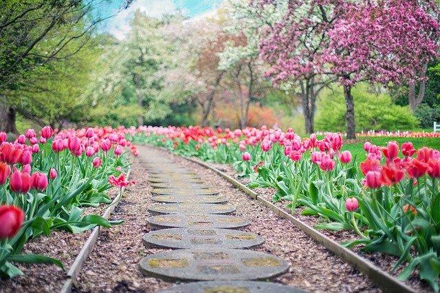 Zakładanie i pielęgnacja ogrodów – od czego zacząć?